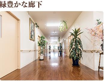 緑豊かな廊下 緑豊かな環境を作るために、施設内には植物を置いて、自然の豊かさを感じていただいてます。